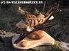 skulpturen-sarrwallermesse-001