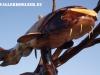 skulpturen-sarrwallermesse-100